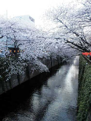 Nakamesakura11