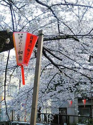 Nakamesakura2